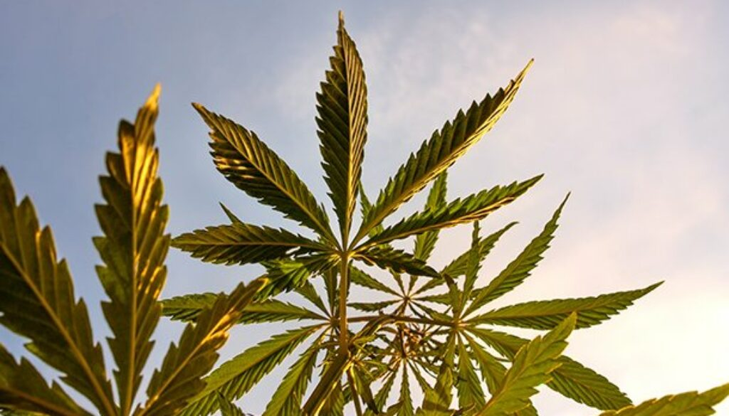 The FDA And Hemp CBD: Can't We All Simply Get Along? (Part I)