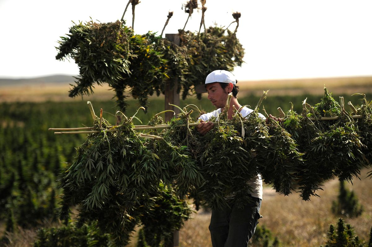 """""""Cannabis Deals With COVID-19"""" Rallied Weed Stocks. Cannabis Might Help Pandemic– If Someone Pays To Find Out."""