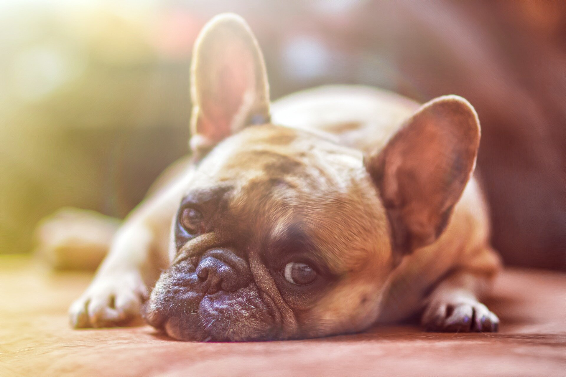 Scientists discover CBD improves arthritis signs in canines