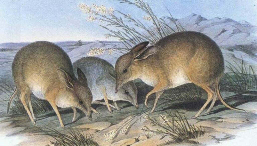 New species extinction target proposed for global nature rescue strategy