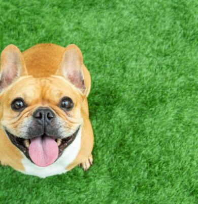 A Growing Group Of CBD Customers Isn't Even Human. However Its Members Value CBDs' Anti-Pain Advantages– With A Resounding 'Woof!'