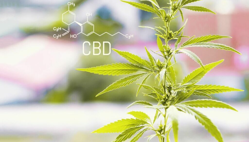 """The CBD """"Industry"""" Is Here To Stay"""